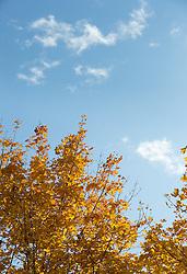 THEMENBILD - herbstlich gefärbte Blätter an einem sonnigen Herbsttag, aufgenommen am 23. Oktober 2015, Innsbruck, Österreich // autumnal colored leaves on a sunny Autumn Day, Baumkirchen, Austria on 2015/10/23. EXPA Pictures © 2015, PhotoCredit: EXPA/ Jakob Gruber