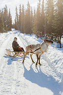 Kenji Yoshikawa and one of his reindeers at his farm outside Fairbanks, Alaska, USA.