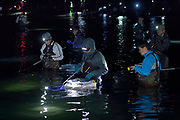 Local fisherman catching the Bioluminescent Firefly Squid (Watasenia scintillans) ( ほたるいか , hotaru-ika ) along the shore of Toyama Bay, in the central Japan Sea.Toyama, Japan | Einheimische Fischer fangen den Leuchtkalmar (Watasenia scintillans) am Ufer der Toyama Bucht. Japan