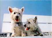 scotty dogs on life guard bench