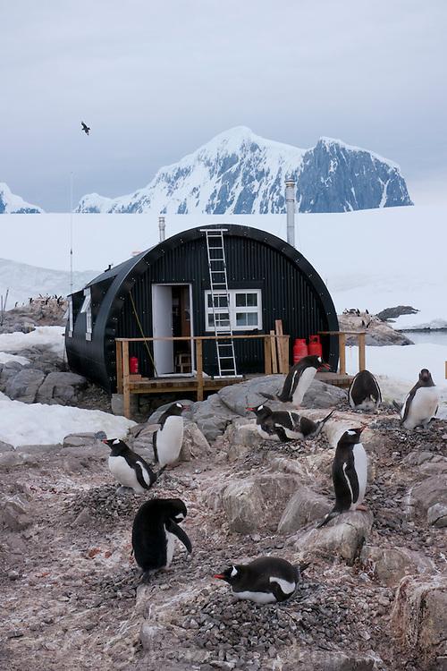 Port Lockroy, Antarctic Treaty Historic Site No. 61, British Base A. Home to a small Gentoo penguin colony. Antarctica.