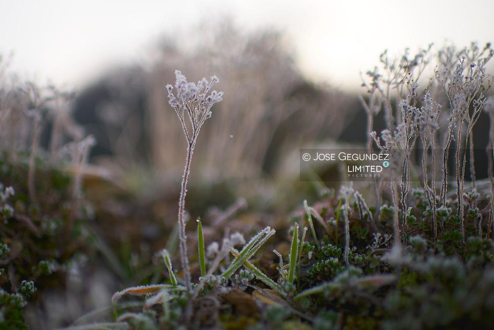 Iced field on winter morning