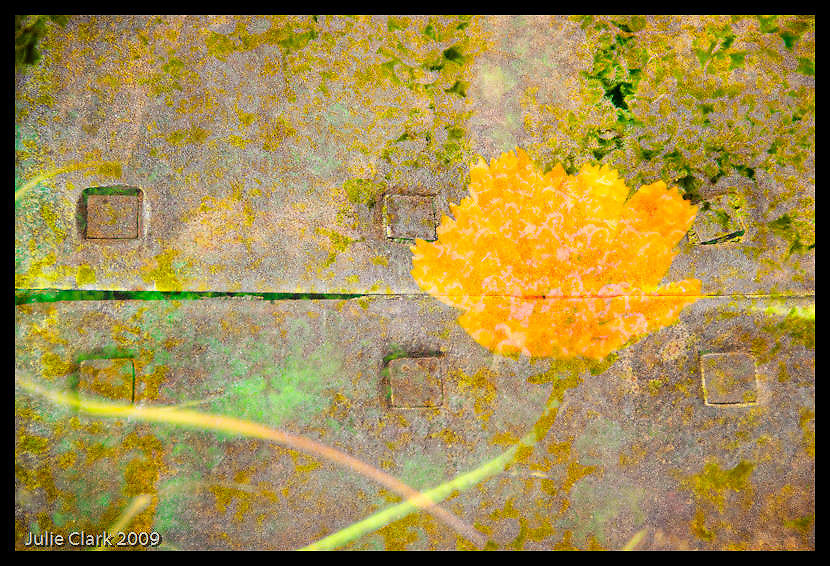 Yellow flower montage
