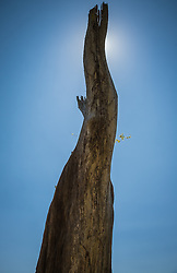 Live Oak Tree Branch against the sky