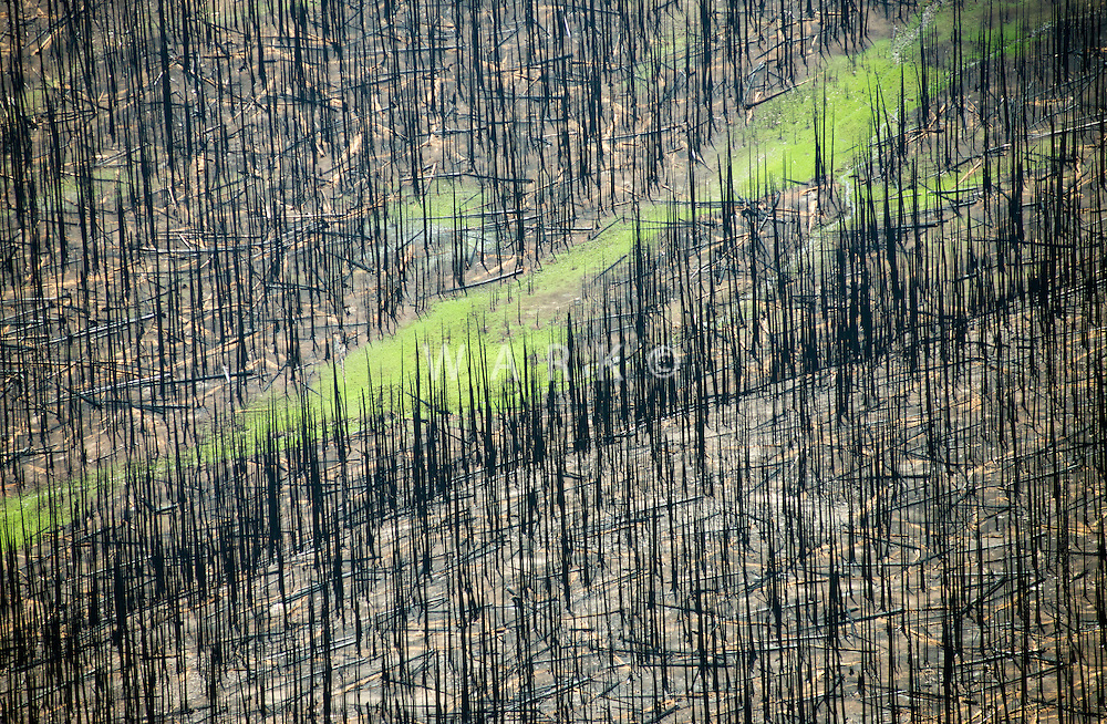 Forest fire burn scar. West Fork Complex fire, Mineral County, Colorado.  July 2013.  80408