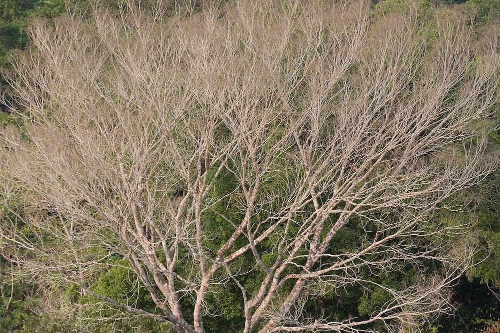 Mato Grosso, Brazil. October 2nd  2007.  Cristalino State Park