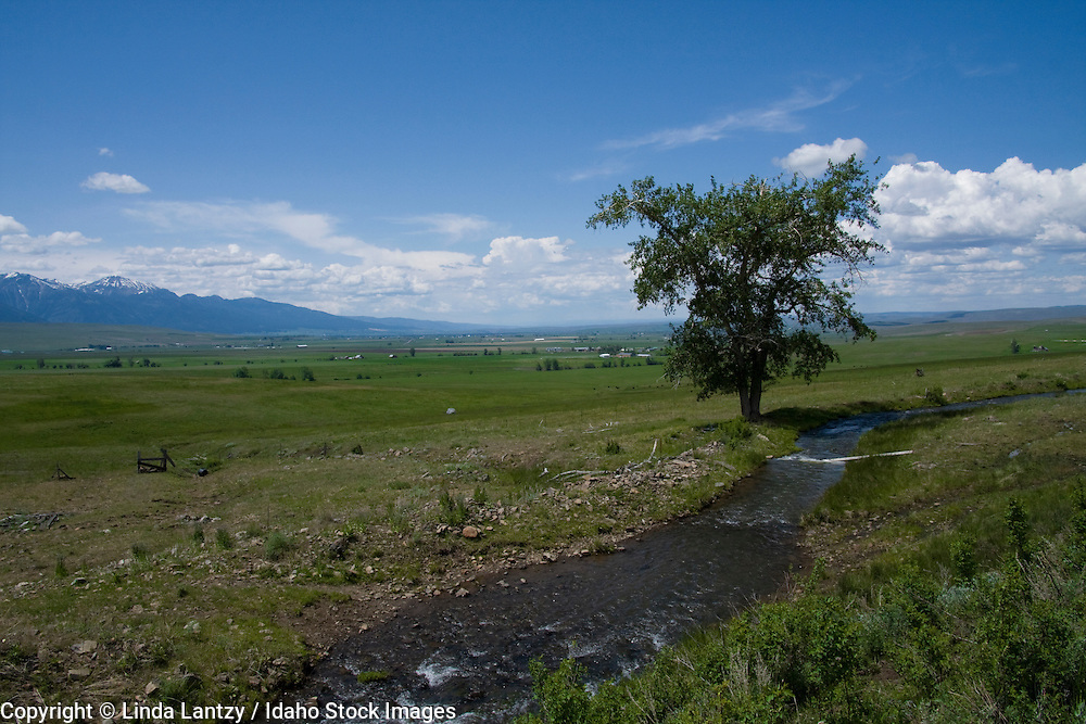 Oregon, Enterprise, Joseph. A tree and irrigation canal/creek in a green spring landscape in the Wallowa valley.