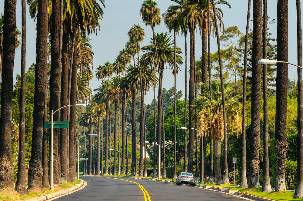 Road Palm Trees, Beverly Hills, CA, California