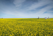 Canola in bloom with oil well pump jack.<br /> Near Okeene Oklahoma in Western Oklahoma