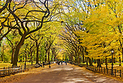 The Central Park Mall sits under a canopy of fall foliage in Autumn, New York City.