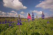A girl walks in a field of Blue lupin (Lupinus pilosus) Photographed in Ramot Menashe, Israel in February