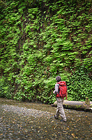 Male hiker exploring Fern Canyon, Prairie Creek Redwoods State Park, California