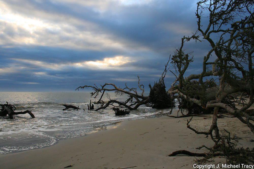 A gloomy and dark Jekyll Island Beach with spidery, dead driftwood trees littering the surf.