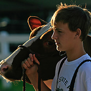 A young 4Her waits with his Jersey cow, as judging began early on the first morning of the Iowa State Fair in Des Moines, Iowa.