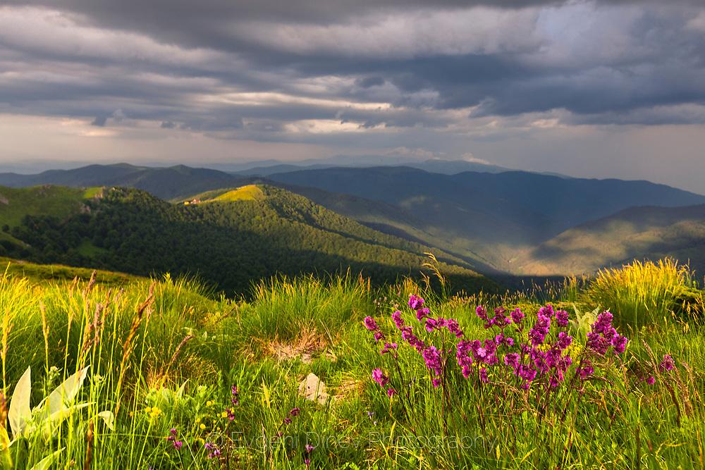 Purple flowers in the green mountain