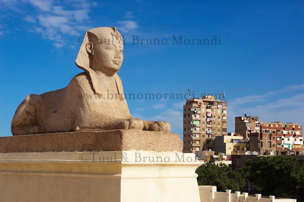 Egypte, Basse Egypte, la côte méditerranéenne, Alexandrie, la colonne de Pompée et le Sphinx  // Egypte, Alexandria, column of Pompea and the Sphinx