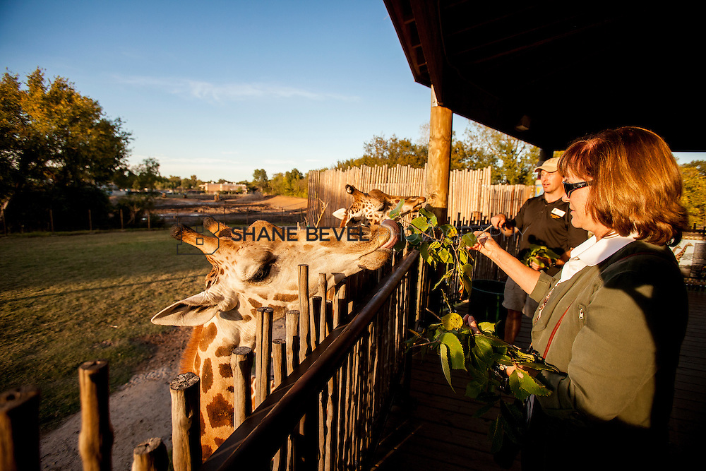 10/8/16 6:11:35 PM --  SFHS All-Employee Safari at the Tulsa Zoo. <br /> <br /> Photo by Shane Bevel