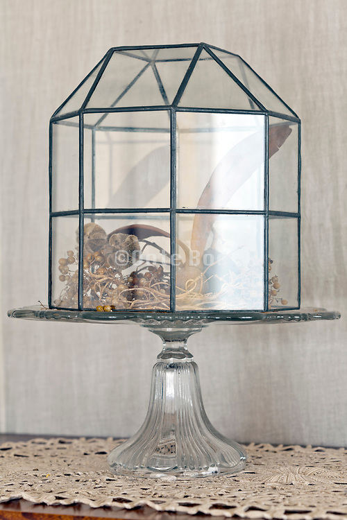 vintage glass bell covering various dried nature plants
