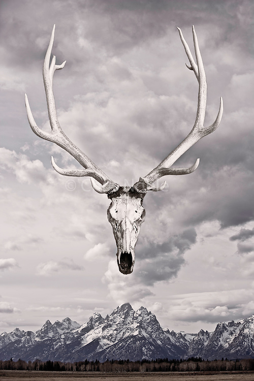 An elk skull floats above the Tetons in Grand Teton National Park, Wyoming