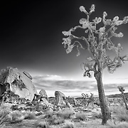 Joshua Tree And Half Skull At Sunset - Joshua Tree National Park CA - Infrared Black & White