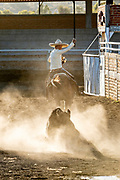 Juan Franco rides off after grabbing the tail of a steer during the Colas en el Lienzo event at the family Charreria practice session in the Jalisco Highlands town of Capilla de Guadalupe, Mexico. Colas en el Lienzo or Steer Tailing is similar to bull dogging except that the rider does not dismount; the charro rides alongside the left side of the bull, wraps its tail around his right leg, and tries to bring the bull down in a roll as he rides past it.
