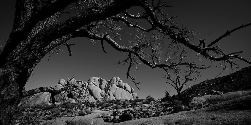 Joshua Tree NP, Calif.,  (Photo by Aaron Black-Schmidt © 2010)