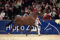302 - Winston<br /> KWPN Hengstenkeuring 2006<br /> Photo © Hippo Foto