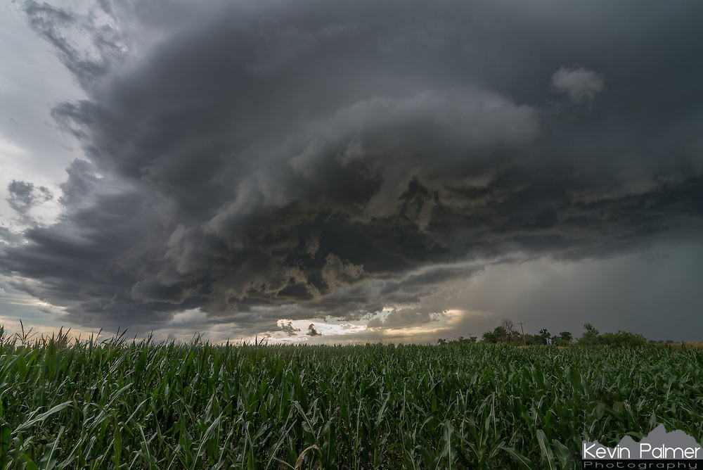 "A severe thunderstorm roars across a corn field near Vale, South Dakota. Corn fields are not common in this area, it almost felt like I was back chasing in Illinois. Minutes earlier, 79 mph winds were recorded with this gust front in nearby Belle Fourche. The ragged, detached clouds underneath the storm (known as scud) were rapidly rising into the storm's updraft. I tried to get as close as I could to the core of the storm without getting pummeled by the 2"" hail, which my car would not have liked."
