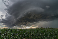 """A severe thunderstorm roars across a corn field near Vale, South Dakota. Corn fields are not common in this area, it almost felt like I was back chasing in Illinois. Minutes earlier, 79 mph winds were recorded with this gust front in nearby Belle Fourche. The ragged, detached clouds underneath the storm (known as scud) were rapidly rising into the storm's updraft. I tried to get as close as I could to the core of the storm without getting pummeled by the 2"""" hail, which my car would not have liked."""