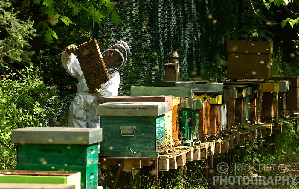 Genval, Belgium - May-19-2004 - Bee Keeping - apiculture, bee, bees, hive, pesticide, pollination, honey, honey bee.
