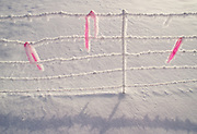 Field of snow with fence and pink ribbon