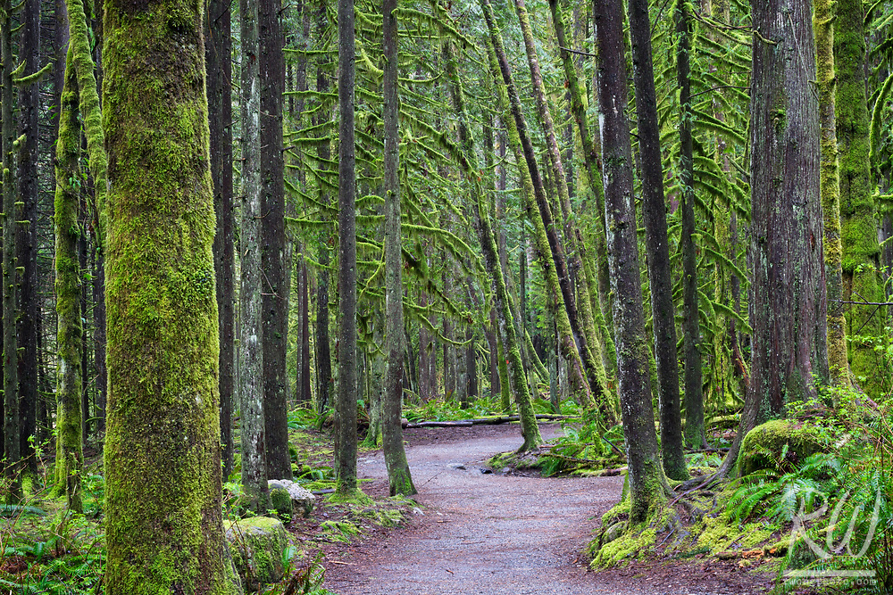 Capilano River Regional Park Hiking Trail, North Vancouver, B.C., Canada