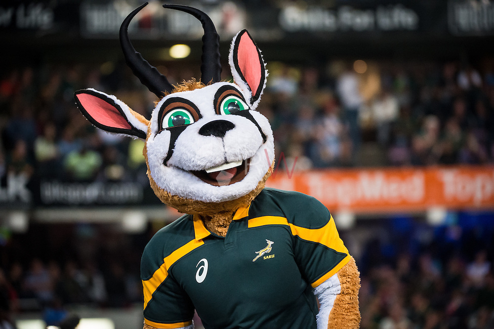 Springbok mascot during the Castle lager Incoming Tour 2014 Rugby match between South Africa and Wales at Kings Park Stadium, Durban, South Africa on 14 June 2014. (Photo By: Ruby Wolff / Sport Life Africa 2014)