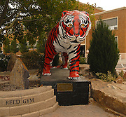 Idaho, Pocatello.  Statue of the mascot outside the Reed Gym at Idaho State University.