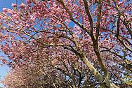 Cherry Trees, Further Lane, East Hampton, New York