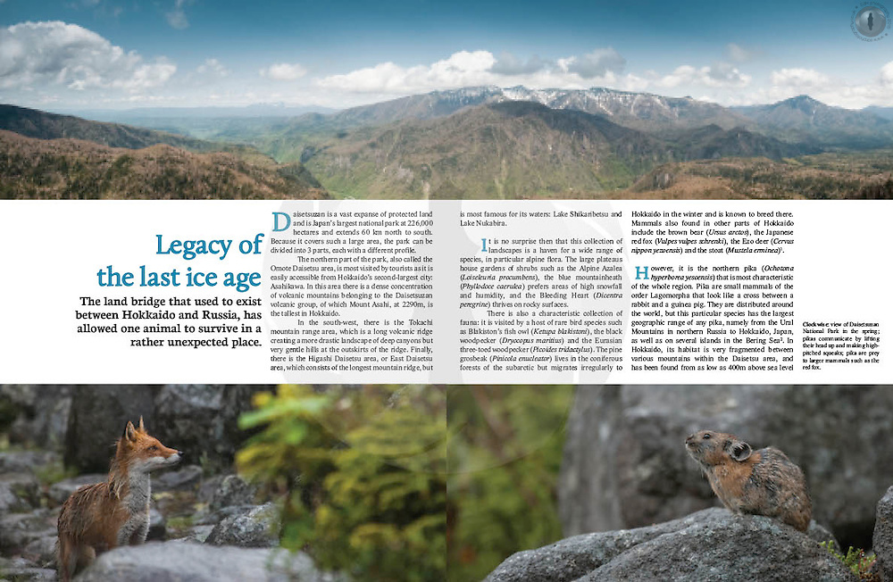 Double-page spread on an article about northern Pika (Ochotona hyperborea) in Daisetsuzan National Park in eastern Hokkaido, Japan. Graphics, text, photography and design my own.