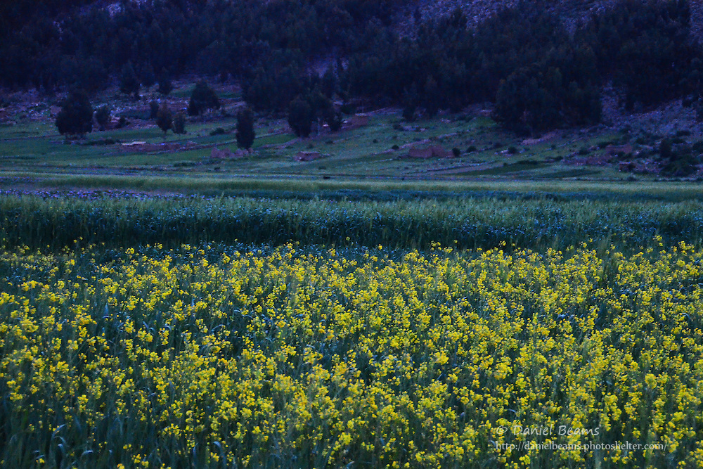 Flowers and barley field in Vacas, Cochabamba, Bolivia