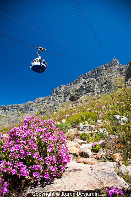 The gondola heads up to the summit of Table Mountain in Cape Town, South Africa. http://www.gettyimages.com/detail/photo/table-mountain-cape-town-south-africa-royalty-free-image/101968652