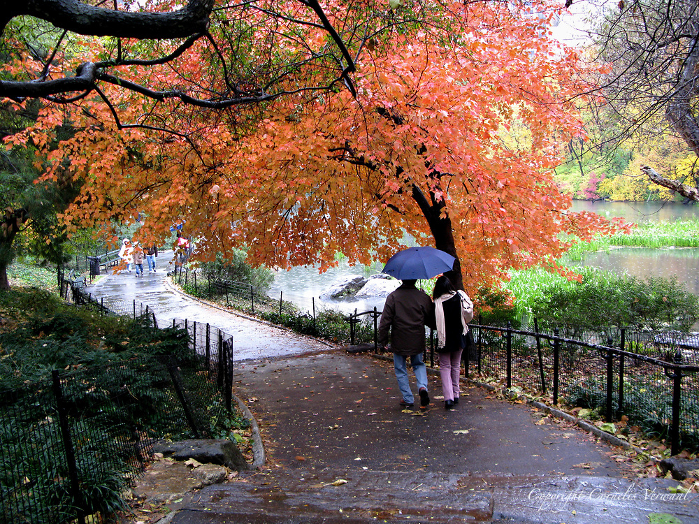 Couple under an umbrella at The Pond in Central Park