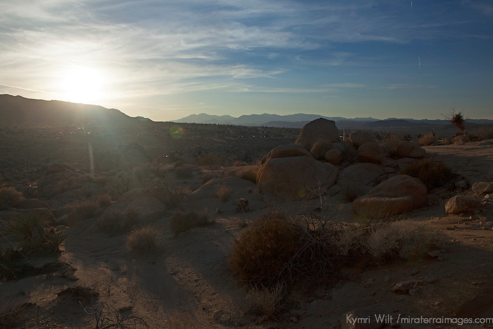 USA, California, Joshua Tree. Desert light of Joshua Tree.