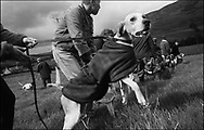 """PREPARING TO """"SLIP"""" THE HOUNDS IN A RACE AT BENTPATH AGRICULTURAL SHOW, BENTPATH, NEAR LOCKERBIE. SATURDAY 2.9.00.©JEREMY SUTTON-HIBBERT 2000.."""