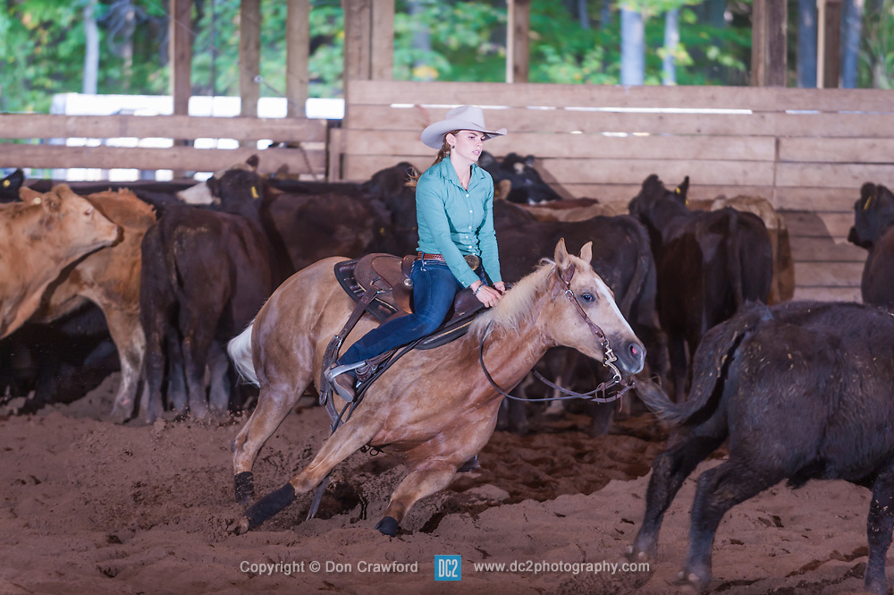 September 23, 2017 - Minshall Farm Cutting 5, held at Minshall Farms, Hillsburgh Ontario. The event was put on by the Ontario Cutting Horse Association. Riding in the $250 Novice Rider Class is Lisa Mayer on Paldur Puff owned by the rider.