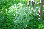 Lush green weeds growing in a neglected garden