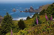 The Oregon coast near Brookings