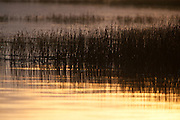 Flooded grasses in Ninepipe National Wildlife Refuge, Montana
