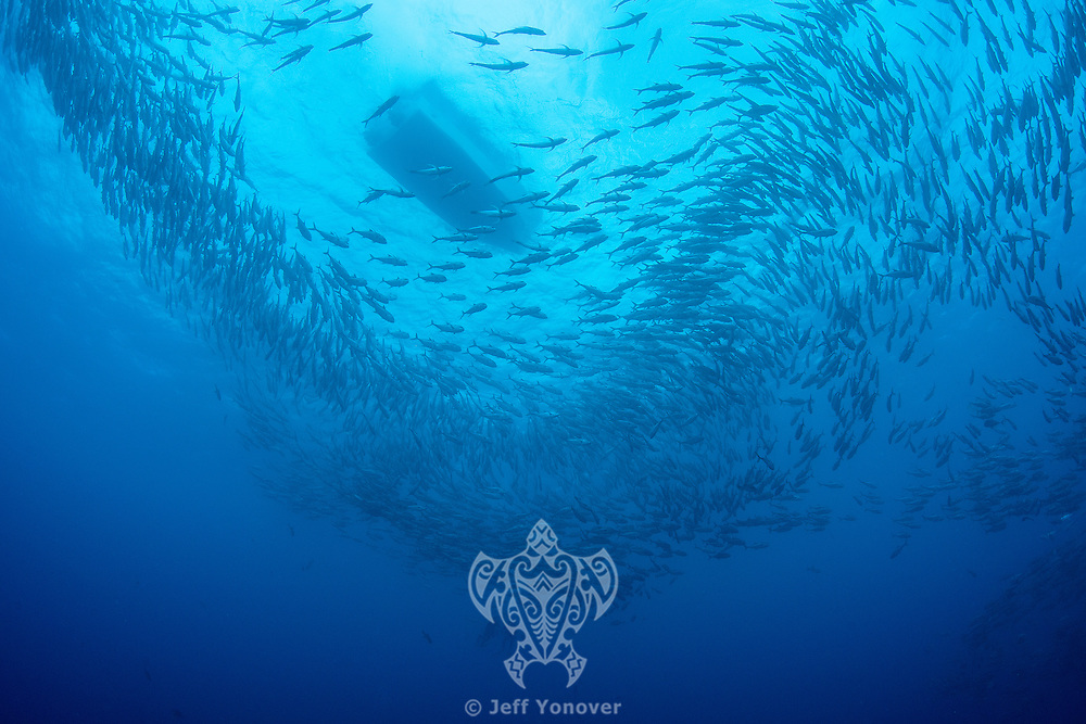 Divers, Schooling Jacks, and Boat<br /> <br /> <br /> Shot at Cocos Island, Costa Rica