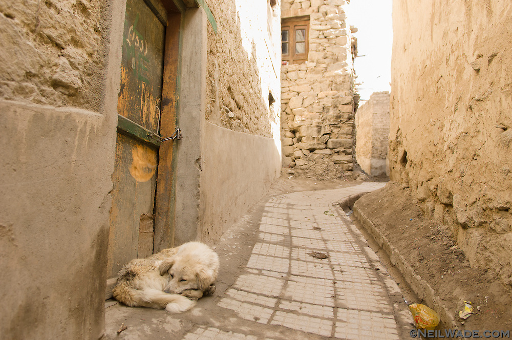 A dog sleeps in a doorway in the old town of Leh, India.
