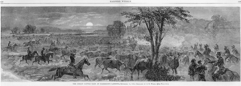 """Civil War: Confederates steal thousands of cattle in the  """"Great Cattle Raid"""" at Harrison's Landing on the James River, in Virginia.   Illustration from September 16, 1864. Pages 648 & 649"""