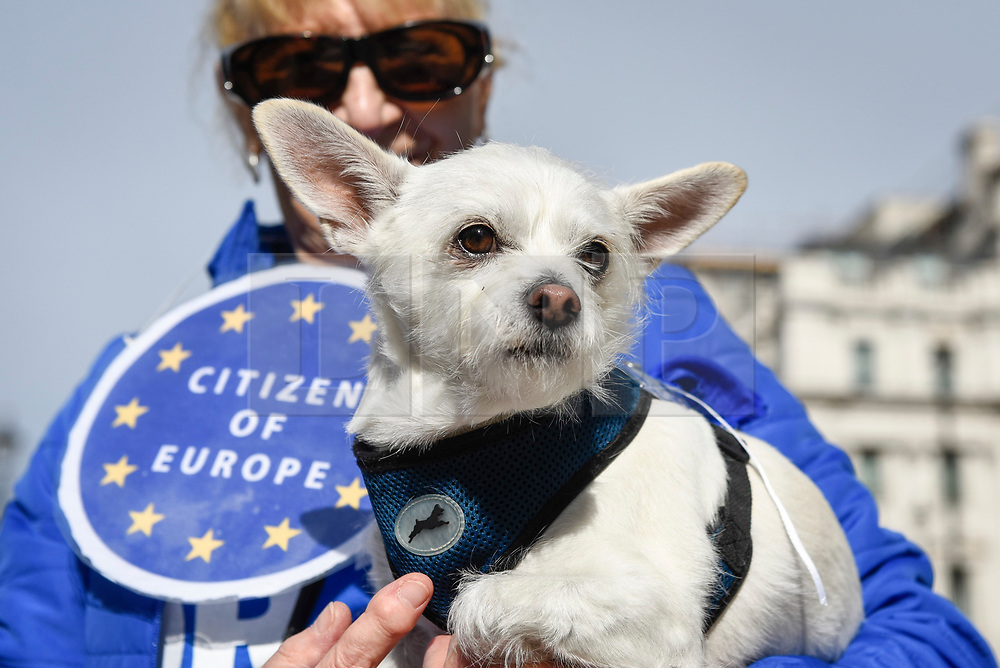 """© Licensed to London News Pictures. 07/10/2018. LONDON, UK. Decorated participants join dog owners, accompanied by their pets, take part in the """"Wooferendum Dog March"""", calling for a People's Vote on Brexit, walking from Waterloo Place to Parliament Square.  Photo credit: Stephen Chung/LNP"""