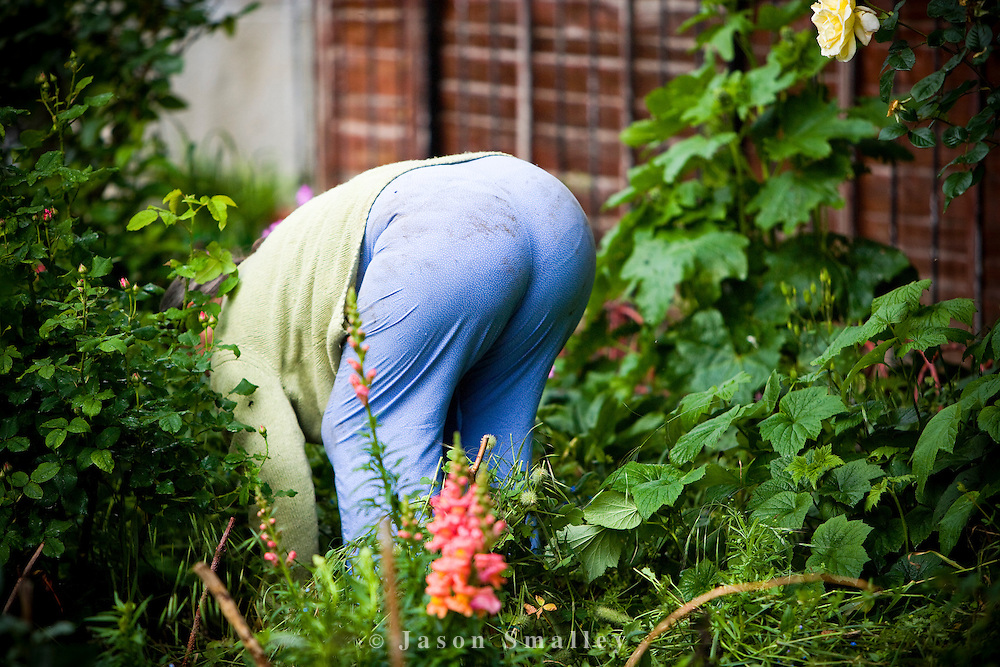 lady weeding in an allotment garden